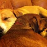 Penny & Osage