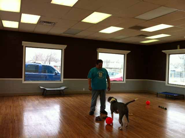 playroom at Dogville Daycare and Boarding